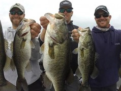 Differences Between Largemouth and Spotted Bass