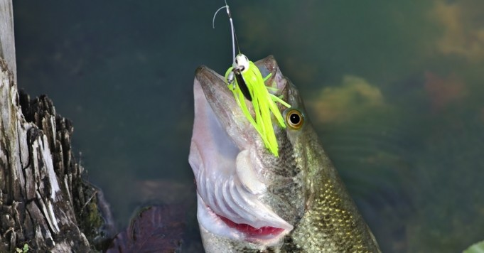 Build A Spinnerbait In 15 Easy To Follow Steps